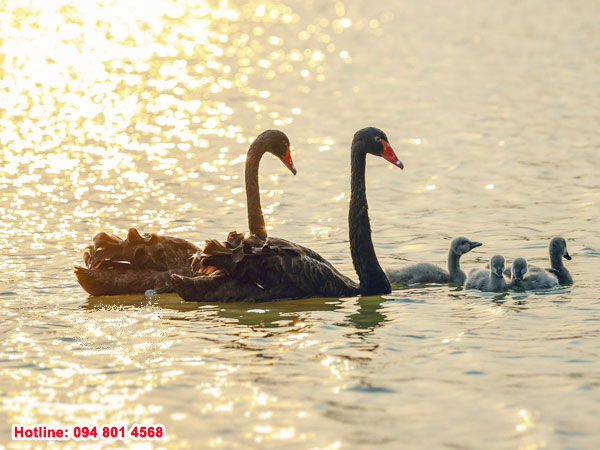 """Công viên Hồ Thiên Nga - """"Trái tim"""" của Ecopark"""